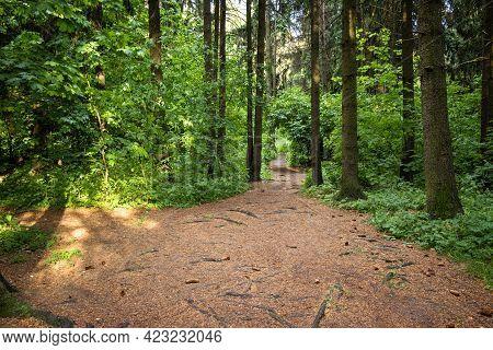 Wide Walking Path In A Dense Coniferous Forest