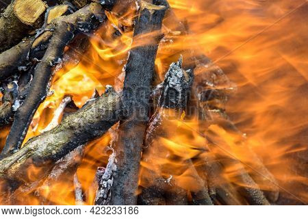 Wind Blows Up Bonfire Made Of Branches Of Fruit Trees. Flame Flutters In Wind. Process Of Preparing