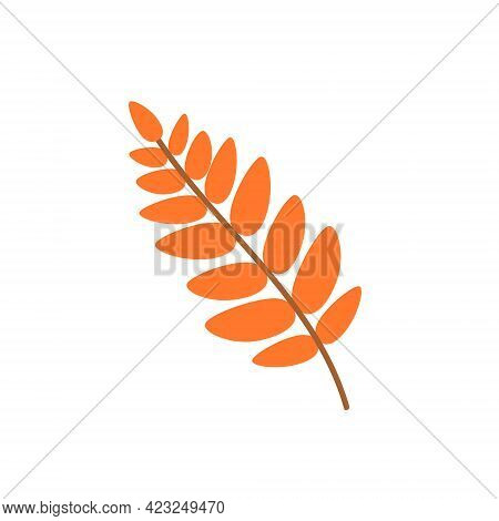 Leaf Of A Mountain Ash Isolated On A White Background. A Fallen Rowan Leaf. Flat Vector Illustration