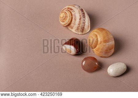 Brown Semi-precious Stones And Shells As Decorative Elements, Top View