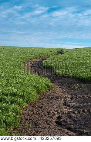 Soil Erosion. The Rains Have Eroded The Soil In The Agricultural Field. Formation Of Ravines In The