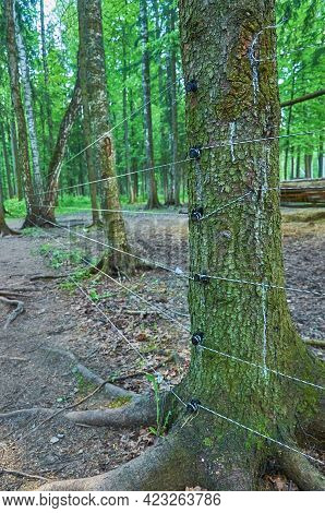 An Animal Enclosure With An Electric Fence In The Forest