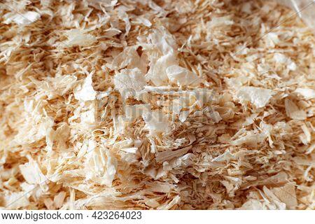 Dry Wood Shavings Background. Wood Dust Texture. Sawdust Pattern Closeup. Sawdust Floor Texture. Top