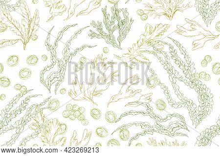 Seamless Pattern With Contoured Seaweeds On White Background. Vintage Repeatable Texture With Differ