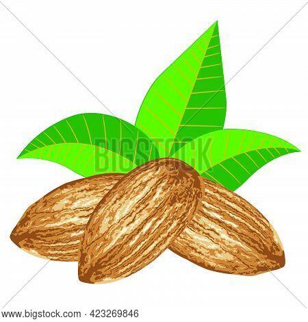 Almond Seed Design
