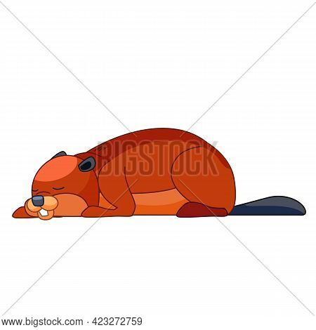 The Beaver Is Asleep. Cartoon Character Of A Small Mammal Animal. A Wild Forest Creature With Brown