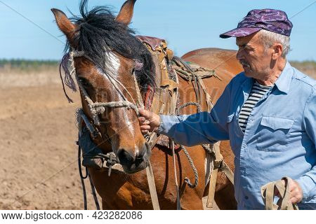 Male Farmer Holds A Harnessed Horse For Work By The Bridle On A Sunny Day Close Up
