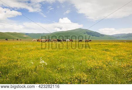 Mountain Farm With Many Haflinger Horses At Pasture In Italy