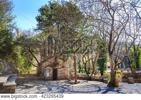 Agia Theodora Of Vasta Miracle Church In Peloponnese, Greece. Trees Growing On The Roof Without Root