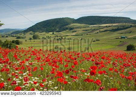 Typical Umbria Rural Landscape In The Spring Season With A Field Of Red Poppies In The Plateau Of An