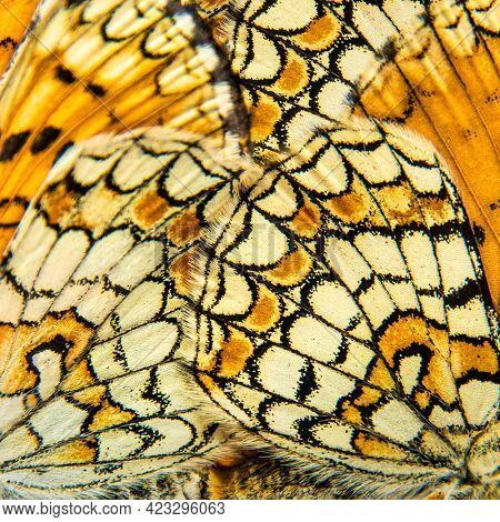 Detail of two Provençal fritillary butterfly wings