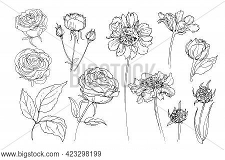 Flowers Line Drawn On A White Background. Vector Sketch Of Flowers. Roses, Scabious
