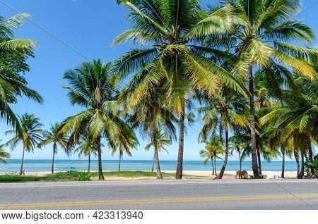 Coconut Trees By The Sea In Sunny Day And Blue Sky In Porto Seguro Beach, Bahia, Brazil