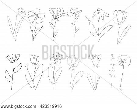 Vector Single One Line Drawn Set Of Flowers. Flower Handdrawing Outline Illustration Isolated On Whi