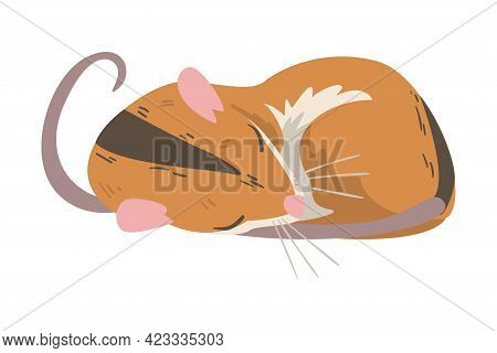 Striped Field Mouse As Small Rodent With Long Tail Cuddling Vector Illustration
