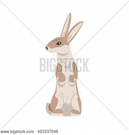 Standing On Hind Legs Hare Or Jackrabbit As Swift Animal With Long Ears And Grayish Brown Coat Vecto