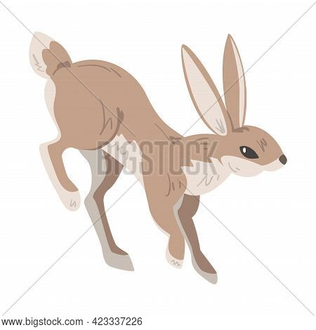 Jumping Hare Or Jackrabbit As Swift Animal With Long Ears And Grayish Brown Coat Vector Illustration