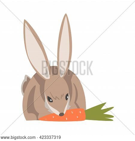 Hare Or Jackrabbit As Swift Animal With Long Ears And Grayish Brown Coat Gnawing Carrot Vector Illus