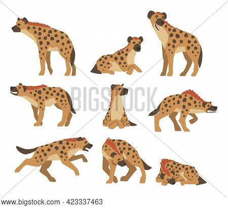 Hyenas As Carnivore Mammal With Spotted Coat And Rounded Ears Sitting, Standing And Attacking Vector