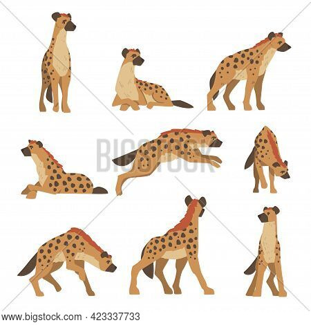 Hyenas As Carnivore Mammal With Spotted Coat And Rounded Ears Sitting, Standing And Running Vector S