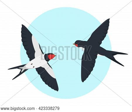 Two Flying Swallows In The Sky. Swallow Birds Vector Illustration.