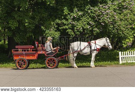 Beautiful White Horse Harnessed To A Cart, White Horse Harnessed To A Cart For Riding Walking In The