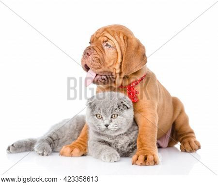 Bordeaux Puppy Hugging Cat. Isolated On White Background.