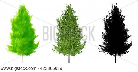 Set collection of Eagleston Savannah Holly trees, painted, natural and as a black silhouette on white background. Concept or conceptual 3d illustration for nature, ecology and conservation, strength