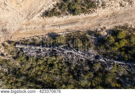 Drone Aerial Photograph Of A Dead Tree Lying On The Ground Near A Dirt Track After A Bushfire In A F