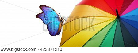 Colors Of Rainbow. Multicolored Umbrella And Bright Blue Tropical Morpho Batterfliy Close-up. Rainbo