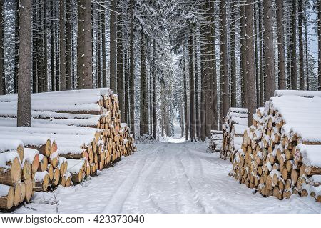 A Pile Of Wood Covered With Snow. Winter Coat, Forest Path And A Pile Of Coniferous Wood Next To It.