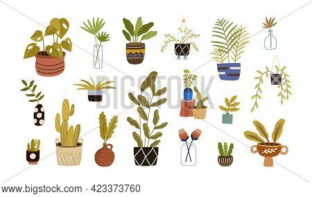 Set Of Different Foliage Indoor Plants For House And Office Interior Decoration. Green Houseplants I