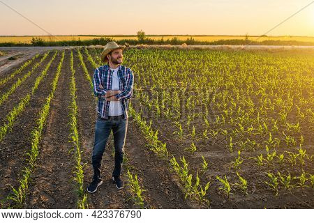 Farmer Is Standing In His Growing Corn Field. He Is Satisfied Because Of Successful Sowing.