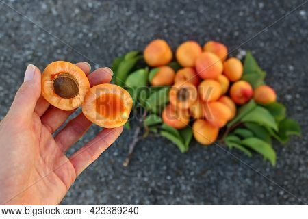 Two Halves Of An Apricot In A Female Hand On A Background Of Blurry Apricots.