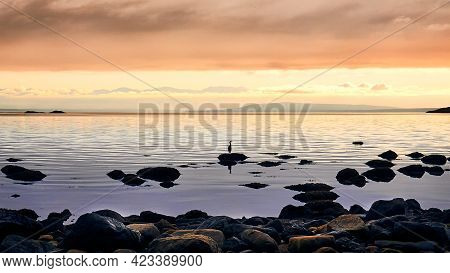 Sunset On The Pacific Coast. Lonely Seabird On A Stone. Golden Sunset Rays Over The Sea.  Coastal St