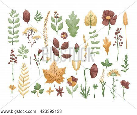 The Vector Set With Herbarium Leaves And Flowers. Hobby. Botanic Set.