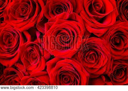 Beautiful Red Rose Flowers As Background, Close Up. Bouquet Of Flowers, Fresh Roses For Background.