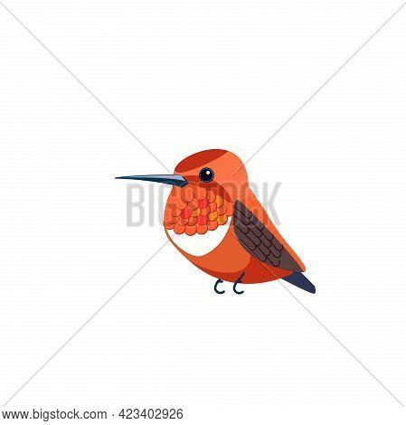 Rufous Hummingbird Is One Of Seven Species In The Genus Selasphorus. Orange Small Bird Cartoon Flat