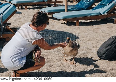 Kalafati, Greece - September 24, 2019: Woman Feeding Diana The Goose, A Mascot Of Kalafati Beach, A
