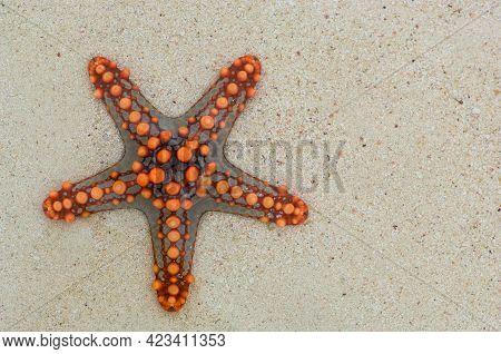 Starfish On The White Sandy Beach With Bright Grains Of Sandy Beach