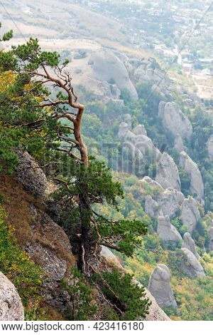 Foggy Rocky Landscape With Pines On Top Of Yuzhnaya Demerdzhi Mountain In Crimea. Dolina Privideniy,