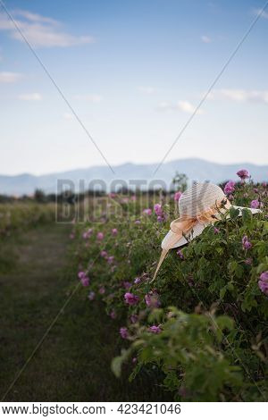 Closeup Perspective View Of Woman Wicker Hat With Light Colored Scarf In A Plantation Of Cultivated