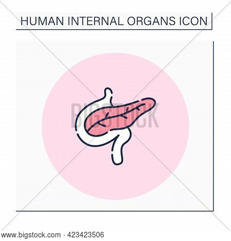 Pancreas Color Icon. Digestive System And Endocrine System.medical Treatment. Body Parts. Human Inte