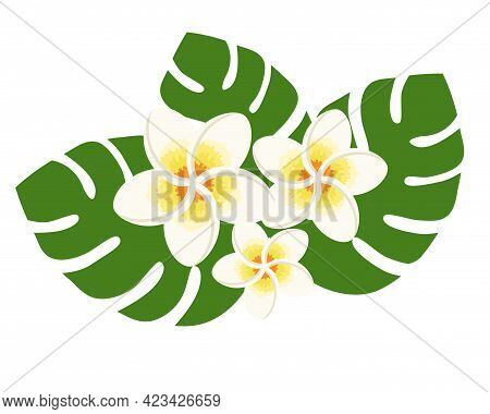 White Plumerias With Green Leaves Vector Illustration On White Background. Hawaiian Tropical Exotic