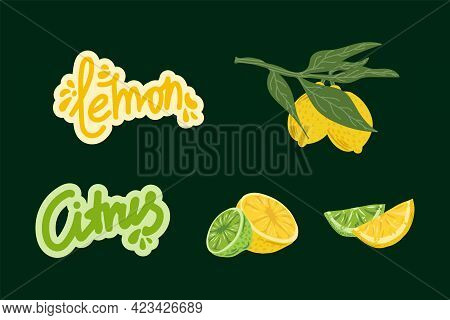 A Set Of Illustrations Of Citrus Fruits. Vector Juicy Lemon And Lime. Fruit Collection For Summer Me