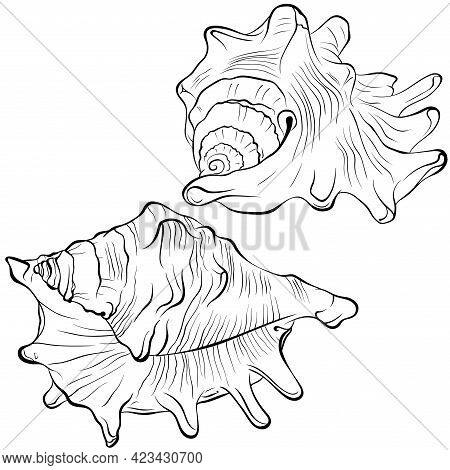 Spiked Seashell Arbitrary Shape From Different Angles. Vector Hand Drawn Line Art Illustration Isola