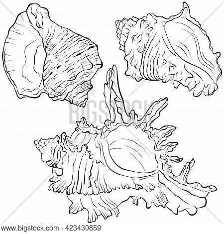 Set Of Three Marine Spiked Shells Of Various Spiral Shapes. Vector Hand Drawn Line Art Illustration