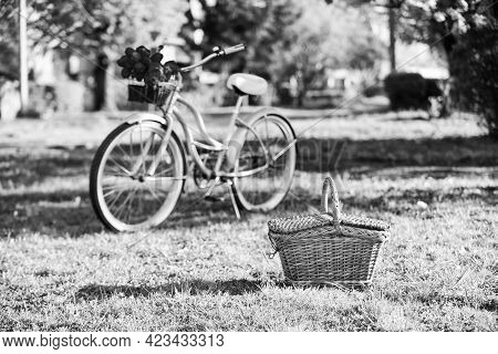Picnic Time. Nature Cycling Tour. Retro Bicycle With Picnic Basket. Bike Rental Shops Primarily Serv