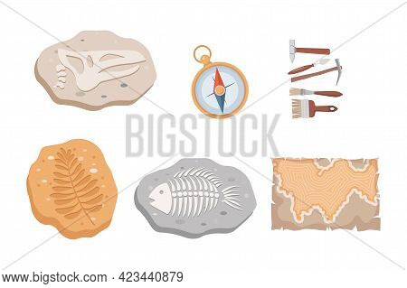 Fossil Fish And Dinosaurs Skeletons And Plants, Compass, Map, And Archeology Tools Vector Flat Illus