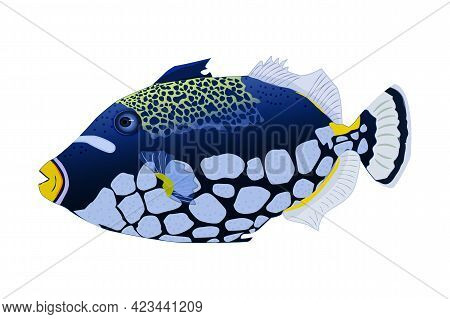 Tropical Fish Isolated On White Background. Clown Triggerfish. Sea Animal, Maritime Character. Balis